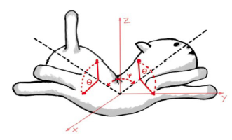 Figure 3: Representation of a falling cat. (Drawing by E. Kuehne, in Mehta, 2012, p. 5).