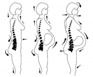Fig. 3 Anticipatory bodily changes during pregnancy