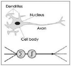 Figure 11: From the neuron to the artificial neuron (cf. Leverington of Texas Tech University and his introduction to feed forward propagation in neural networks).