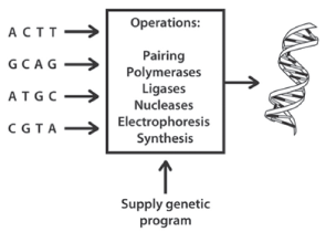 Figure 3: The DNA polymerase machine in action. It is equivalent to a Turing machine. The medium of computation is the test tube and the concentration of DNA (more of an art than science at that time) is the output.