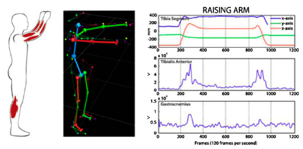 Figure 6. Integration of motion capture data and physiological sensors.