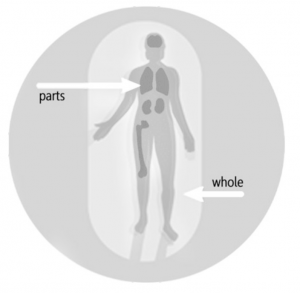Fig. 4 Neither the whole body nor parts of it can be described fully