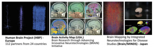 Fig. 2 Second tier research: the brain