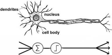 Fig. 9 A reductionist neuron-based model.